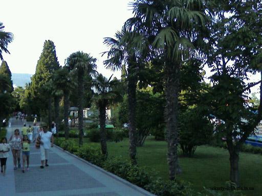 И это не заповедник и не ботанический сад. Это просто одна из городских аллей в Ялте