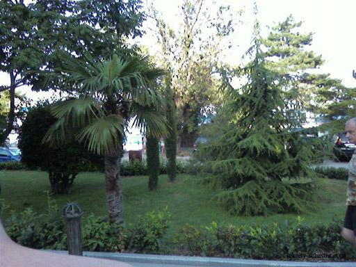 удивительное соседство экзотических пальм и сосен, кипарисов и вековых дубов. Такое соседство возможно только благодаря уникальному климату южного Крыма